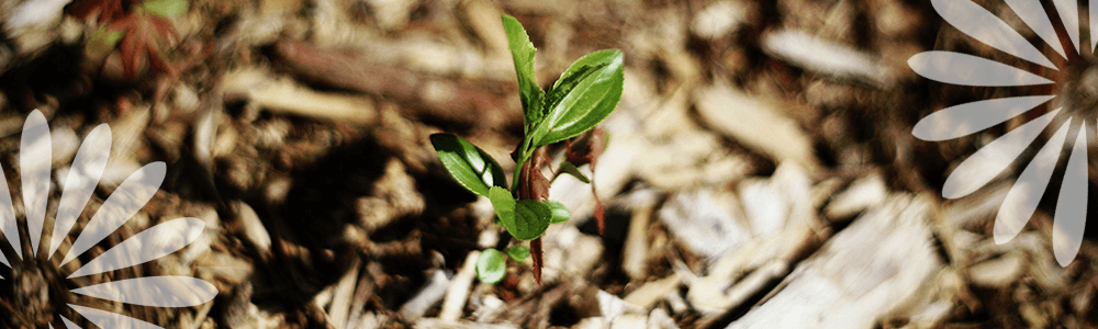 Mulching Your Garden