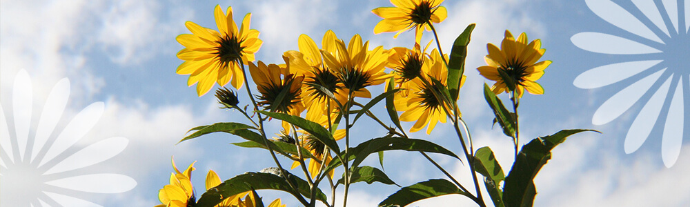 Native Plants of Ontario You Should Grow in Your Garden