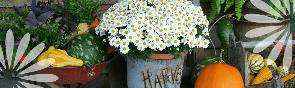 Fall Planter Container Ideas Living Color Simcoe Ontario